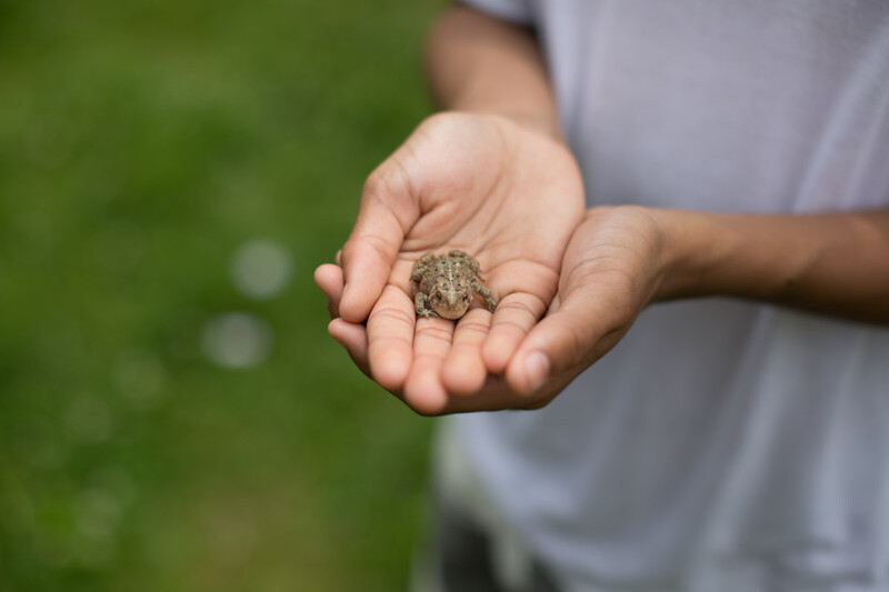 A child holds a small frog