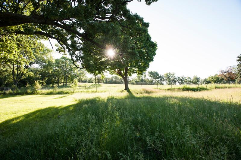 Shady trees on a lawn