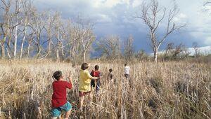 Jewell Wetlands
