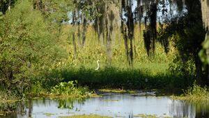 Jean Lafitte National Historic Park and Preserve
