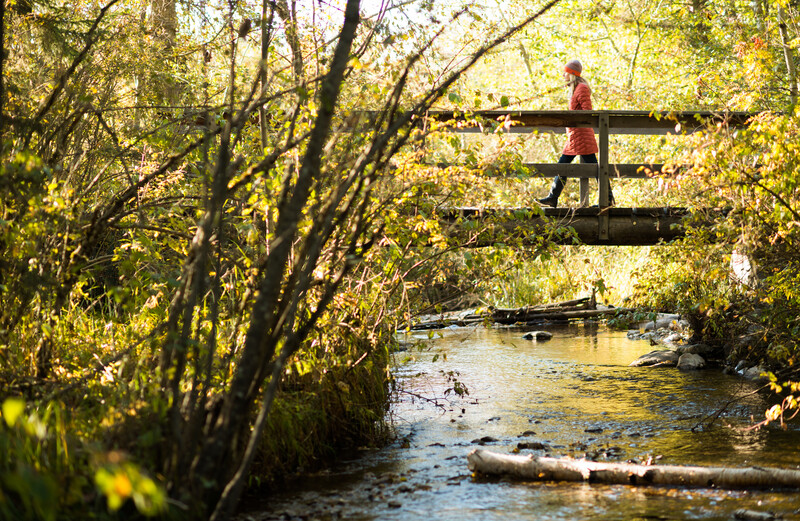 Exploring a forested path, Trumbull Creek in Montana