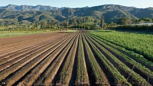 Crop rows below the Rancho Monte Alegre property.