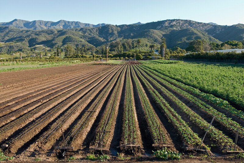 Crop rows below the Rancho Monte Alegre property.