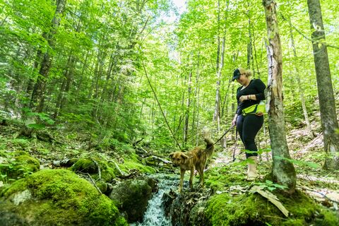 nh_dundee_forest_20190624_051
