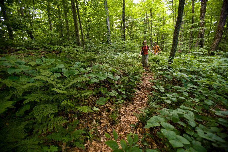 Eden Forest, VT